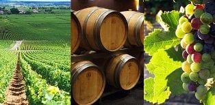 Expertise comptable: groupement foncier viticole